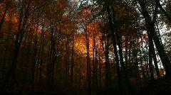 0706-B047 - Fall Foliage - MOS - stock footage
