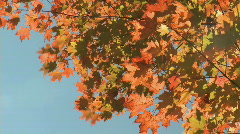 Autumn Leaves (8 of 9) Stock Footage