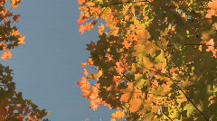 Autumn Leaves (6 of 9) - stock footage
