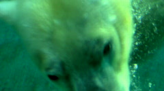 Polar Bear Swimming Underwater 2 Stock Footage