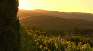 Stock Video Footage of wine_country02