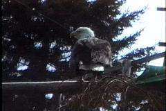 Stock Video Footage of Bald Eagle rehab 2