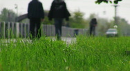 Green grass moving in the wind Stock Footage