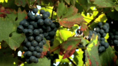 Toasting in a vineyard Stock Footage