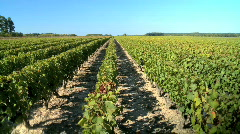 Country vineyards - stock footage