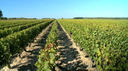 Stock Video Footage of Country vineyards