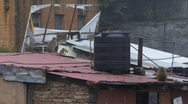 Stock Video Footage of Monkeys on roof tops (w/sound)