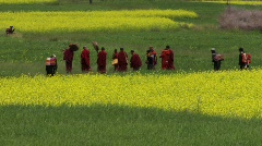 Buddhist monks walking through fields Stock Footage