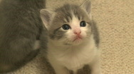 Kittens and Cats (19 of 27) Stock Footage