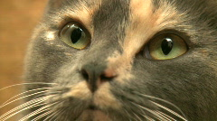 Kittens and Cats (17 of 27) Stock Footage