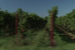 Vineyard field in Southern Germany. Vehicle (Dolly) shot. Stock Footage