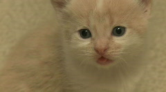 Kittens and Cats (10 of 27) Stock Footage