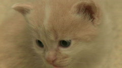 Kittens and Cats (8 of 27) Stock Footage