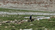 Stock Video Footage of Farmer herds sheep in Himalayas (w/sound)