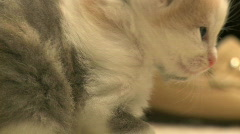 Kittens and Cats (26 of 27) Stock Footage