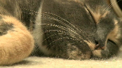 Kittens and Cats (24 of 27) Stock Footage