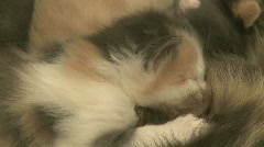 Kittens and Cats (1 of 27) Stock Footage