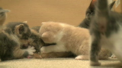 Kittens and Cats (25 of 27) Stock Footage