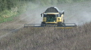 Stock Video Footage of New Holland combine harvester on beans.
