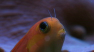 Stock Video Footage of Fish Face