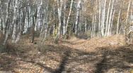 ATV on mountain trail away autumn M HD Stock Footage