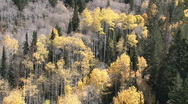 Mountain autumn leaves falling M HD Stock Footage