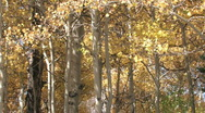 Autumn forest to mountain pan M HD Stock Footage