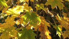Autumn Foliage in Vermont Stock Footage