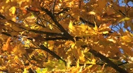 Stock Video Footage of Autumn Foliage in Vermont