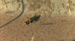 A grasshopper crawling Stock Footage