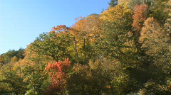 Brightly colored leaves in fall (3 of 4) Stock Footage