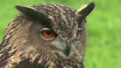 "HD1080i Eurasian Eagle-owl ""Bubo bubo"" (Close Up) with Sound. - stock footage"