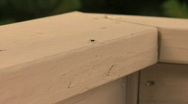 Stock Video Footage of Ant On A Railing