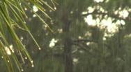 Rain 07 (720p 29.97fps) Stock Footage