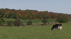 Dairy farm  - stock footage