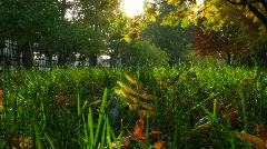 Grass and leaves Stock Footage