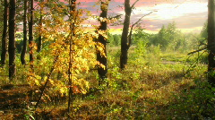 Autumn wood 1 Stock Footage