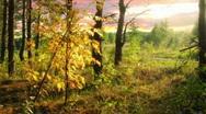 Autumn wood 1 Stock Footage