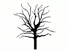 Tree/Growing tree/Branches - stock footage