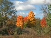 Stock Video Footage of Shades of Autumn