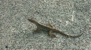 Slow Motion Lizard Running 01 Stock Footage