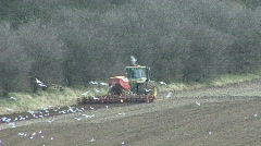 Seabirds behind seed drill - back view 4 Stock Footage