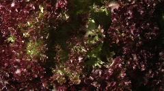 Salad Stock Footage