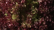 Stock Video Footage of Salad