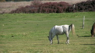 White horse jumping in pasture Stock Footage