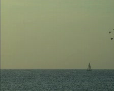 Morning at the sea. Birds swarm and Sailboat on horizon. Stock Footage