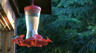Playful hummingbirds at feeder Stock Footage