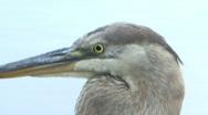 Bird's Head Stock Footage