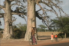 Man on a bicycle and baobab trees Mali Stock Footage