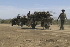 Stock Video Footage of  Donkey carts full of firewood in Mali
